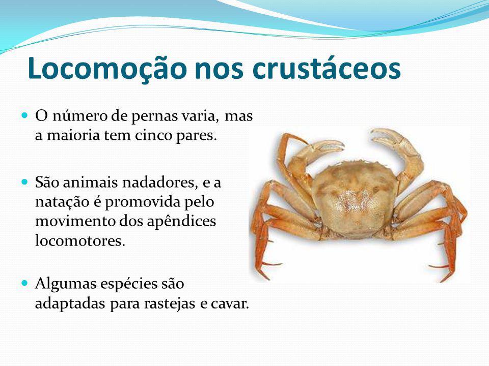 Locomoção nos crustáceos