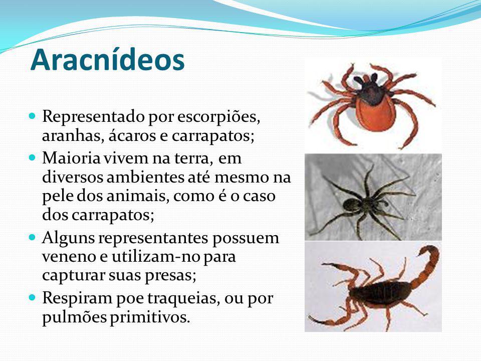 Aracnídeos Representado por escorpiões, aranhas, ácaros e carrapatos;