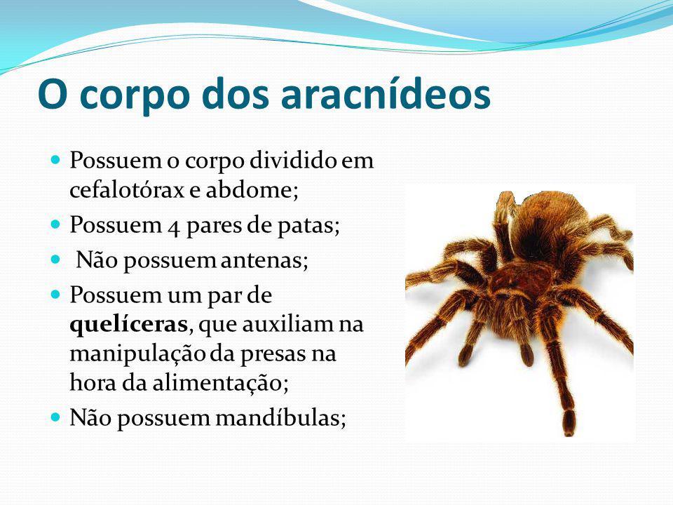 O corpo dos aracnídeos Possuem o corpo dividido em cefalotórax e abdome; Possuem 4 pares de patas;