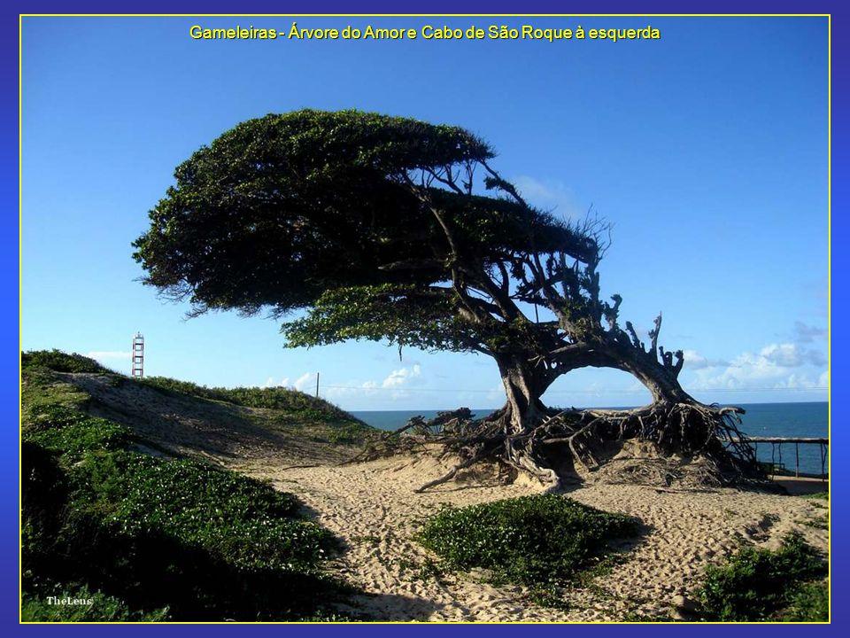 Gameleiras - Árvore do Amor e Cabo de São Roque à esquerda