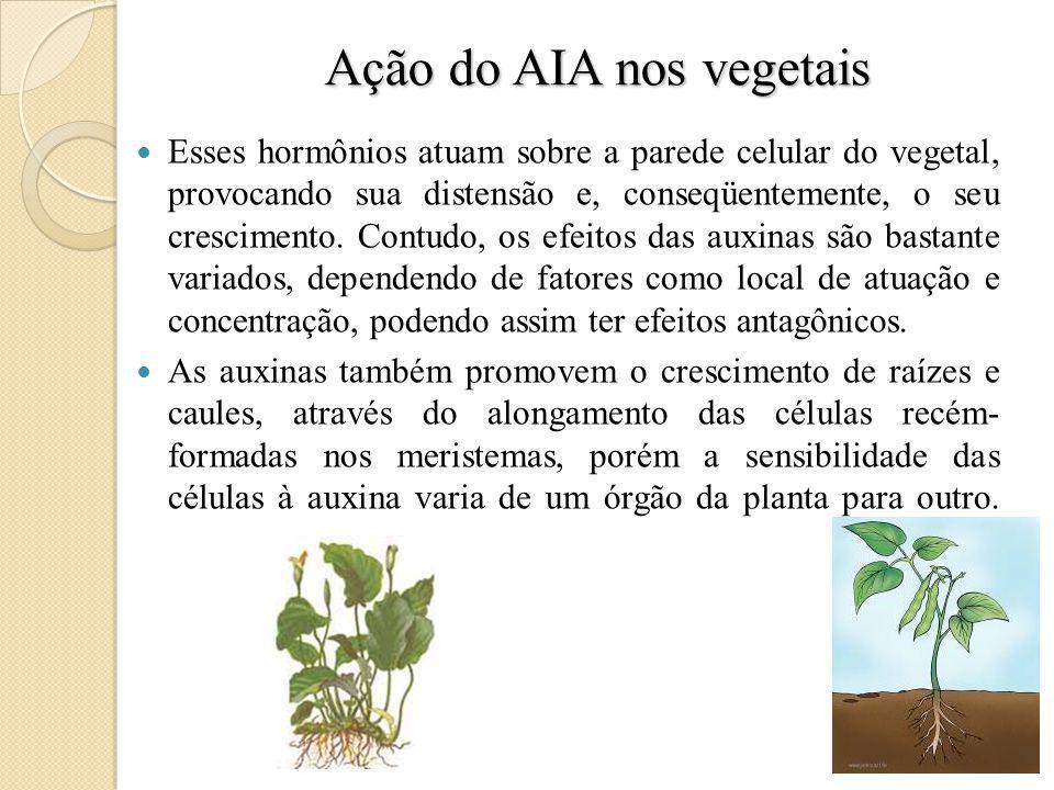 Ação do AIA nos vegetais