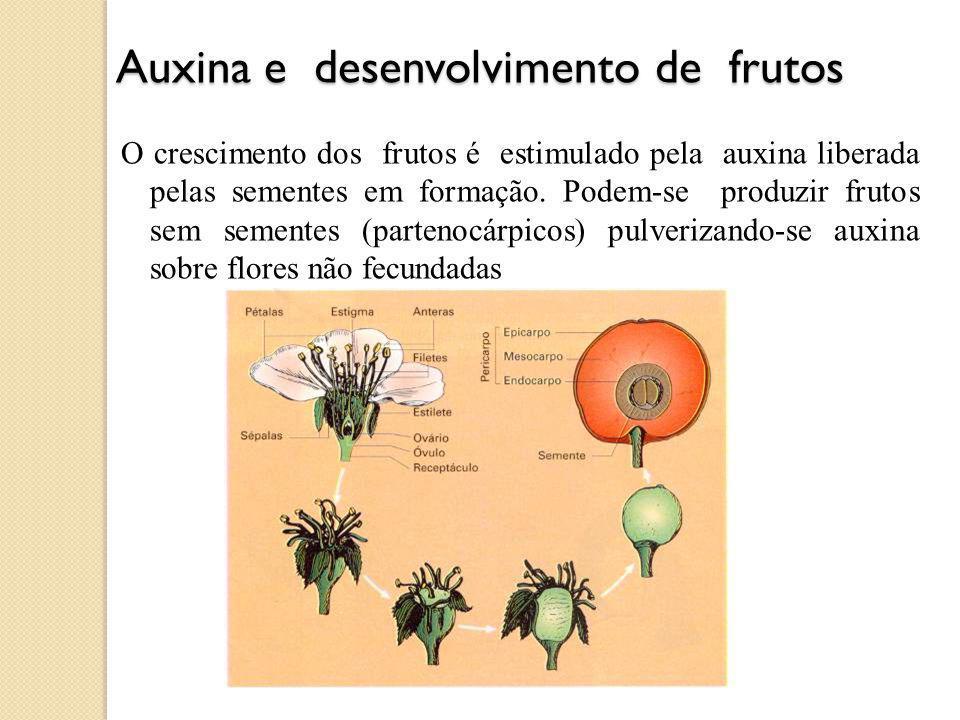 Auxina e desenvolvimento de frutos