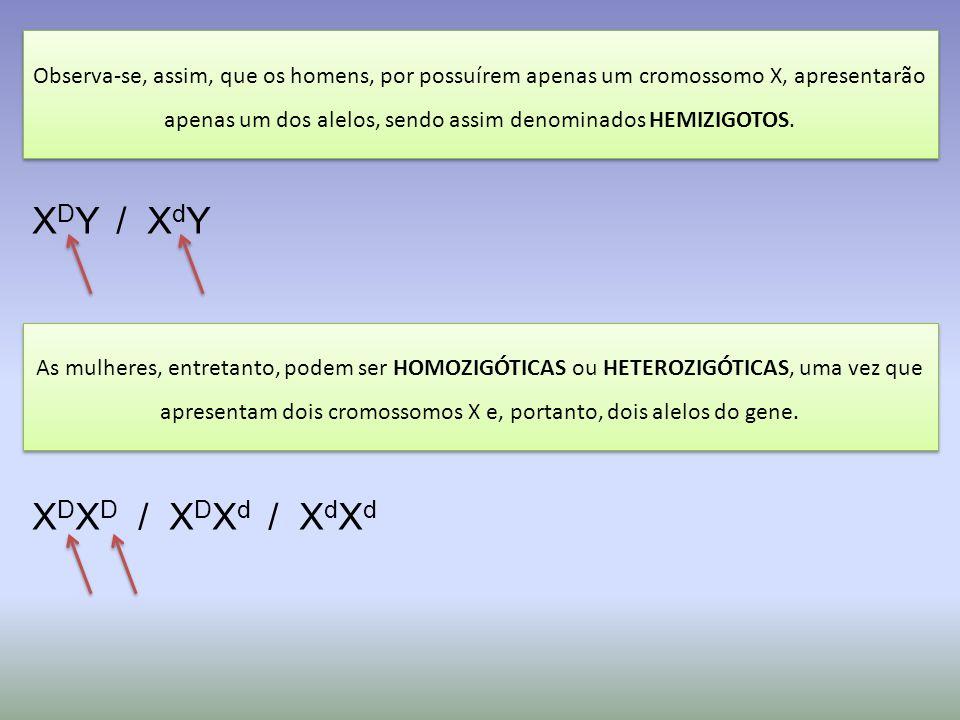 XDY / XdY XDXD / XDXd / XdXd