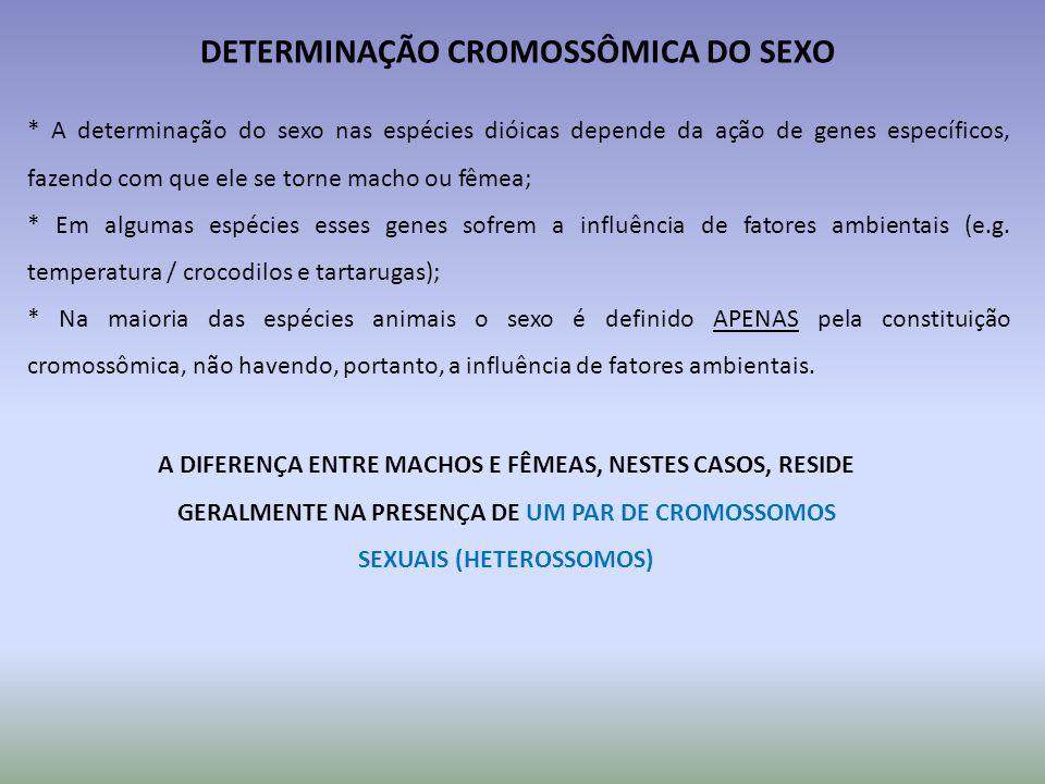 DETERMINAÇÃO CROMOSSÔMICA DO SEXO