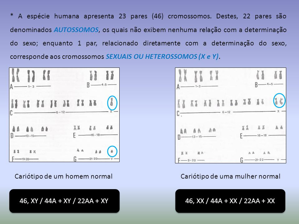 A espécie humana apresenta 23 pares (46) cromossomos