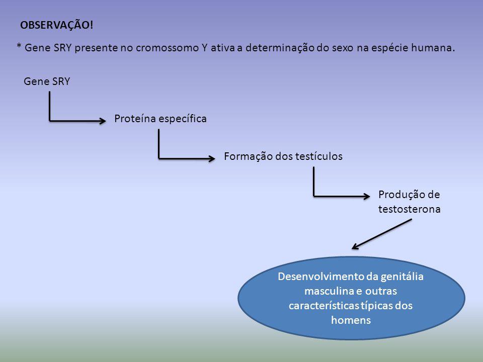 OBSERVAÇÃO! * Gene SRY presente no cromossomo Y ativa a determinação do sexo na espécie humana. Gene SRY.