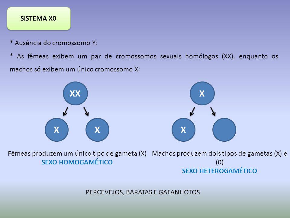 XX X X SISTEMA X0 * Ausência do cromossomo Y;
