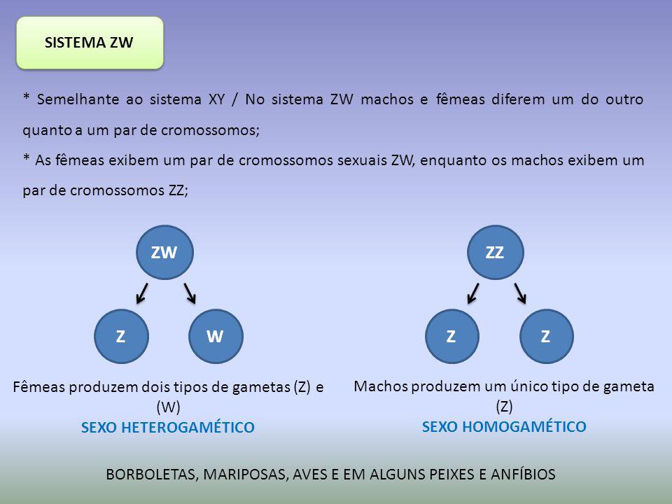 SISTEMA ZW * Semelhante ao sistema XY / No sistema ZW machos e fêmeas diferem um do outro quanto a um par de cromossomos;