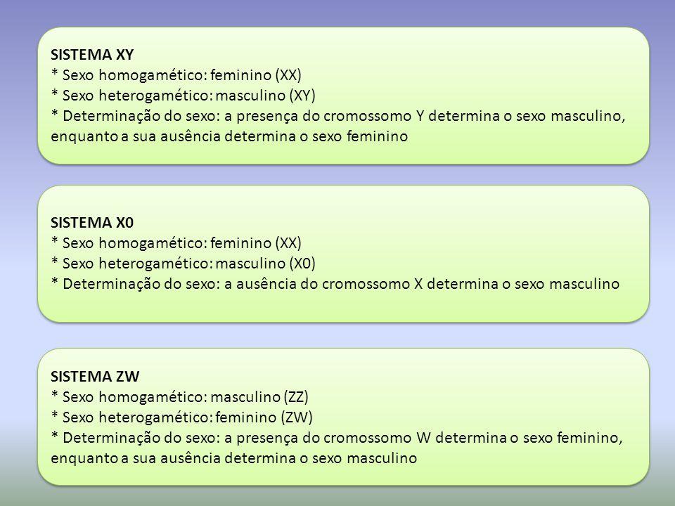 SISTEMA XY * Sexo homogamético: feminino (XX) * Sexo heterogamético: masculino (XY)