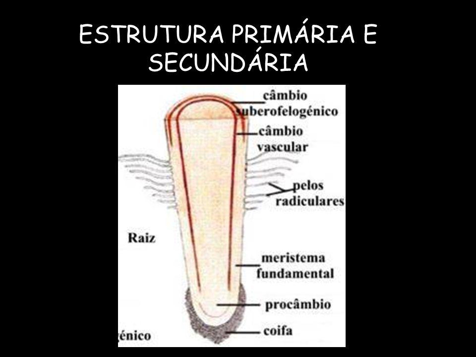 ESTRUTURA PRIMÁRIA E SECUNDÁRIA