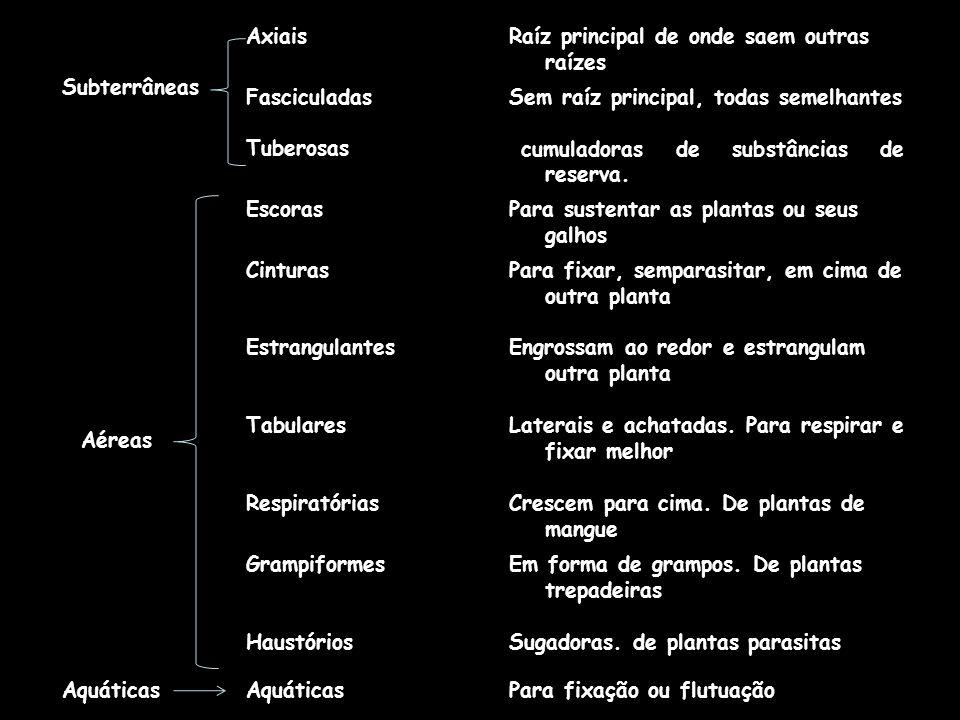 Subterrâneas. Axiais. Raíz principal de onde saem outras raízes. Fasciculadas. Tuberosas. Sem raíz principal, todas semelhantes.