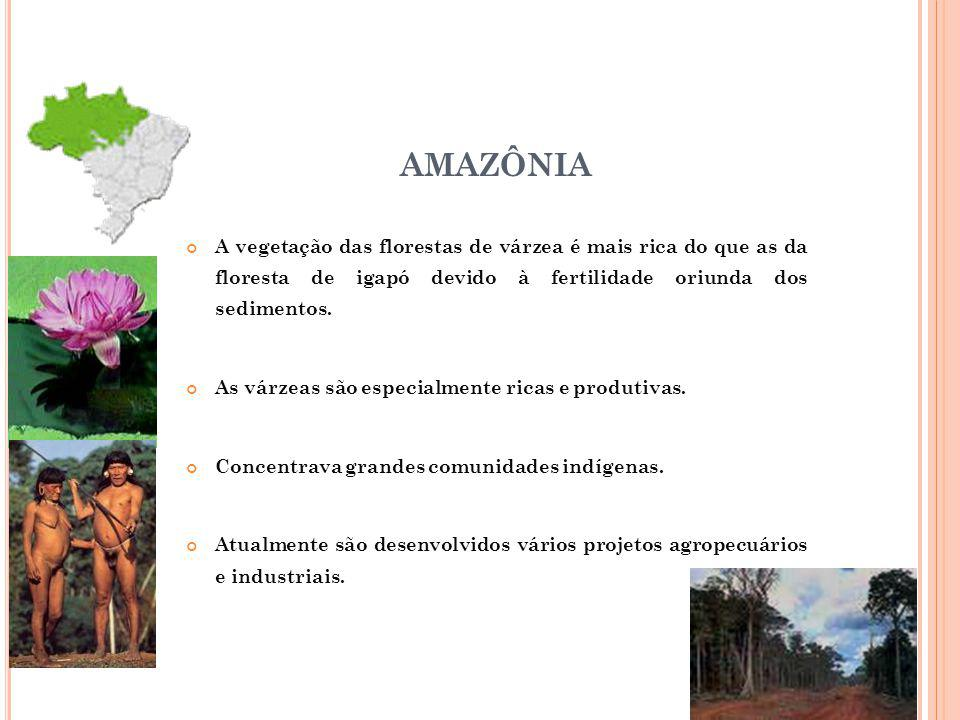AMAZÔNIA A vegetação das florestas de várzea é mais rica do que as da floresta de igapó devido à fertilidade oriunda dos sedimentos.