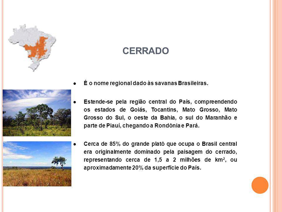 CERRADO É o nome regional dado às savanas Brasileiras.
