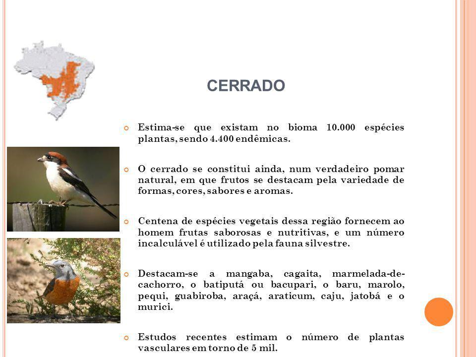 CERRADO Estima-se que existam no bioma 10.000 espécies plantas, sendo 4.400 endêmicas.