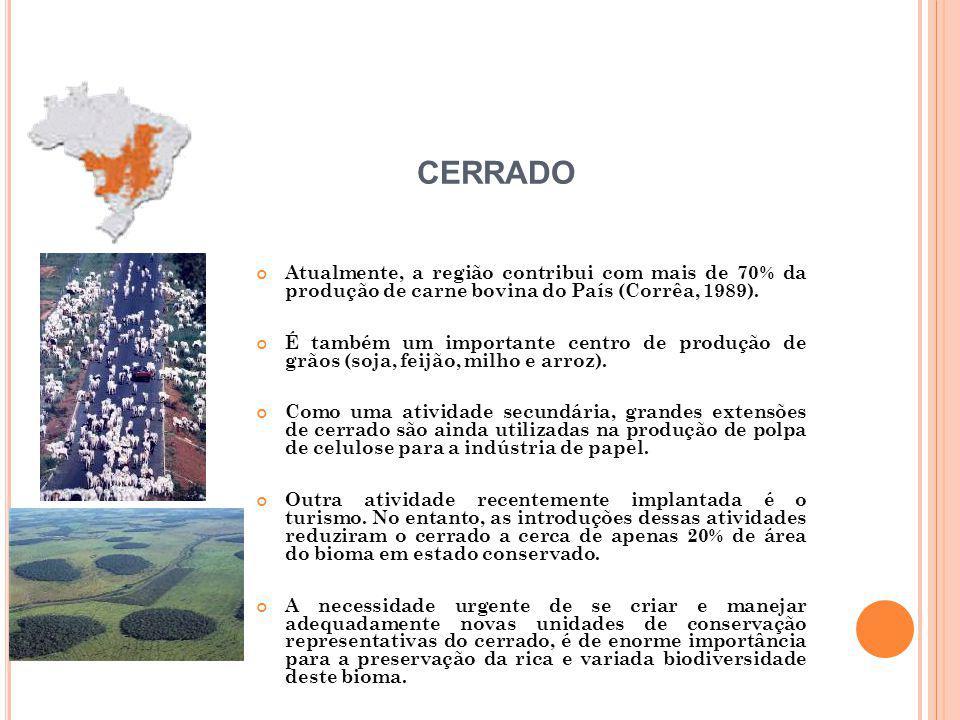 CERRADO Atualmente, a região contribui com mais de 70% da produção de carne bovina do País (Corrêa, 1989).