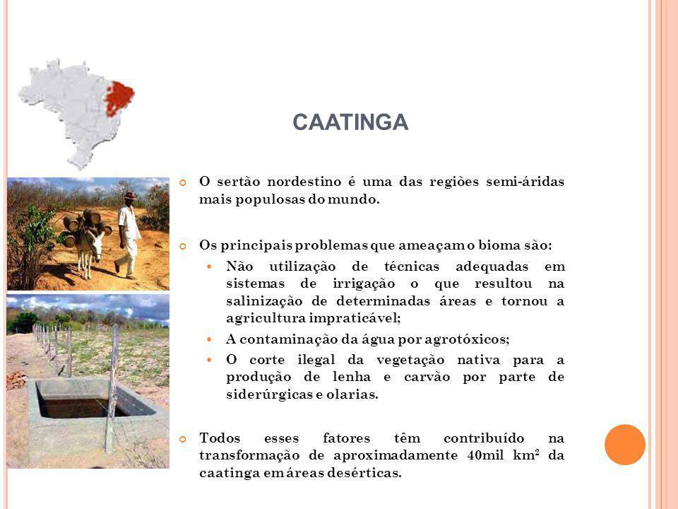 CAATINGA O sertão nordestino é uma das regiões semi-áridas mais populosas do mundo. Os principais problemas que ameaçam o bioma são: