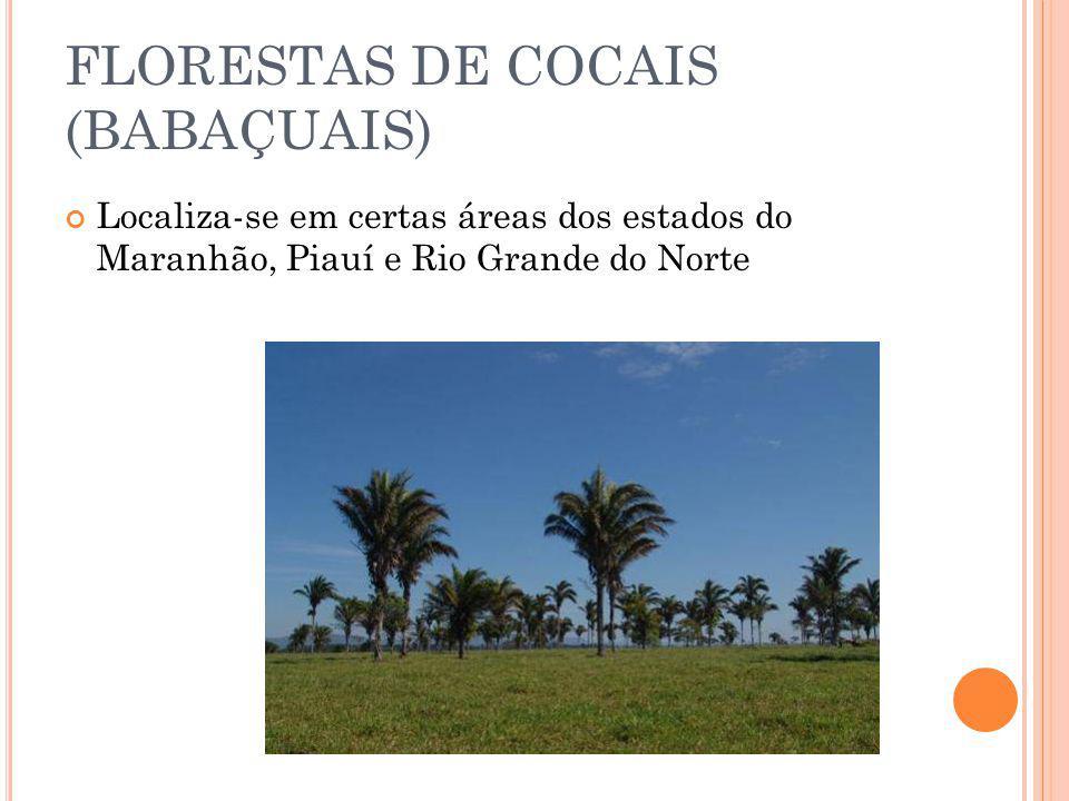 FLORESTAS DE COCAIS (BABAÇUAIS)