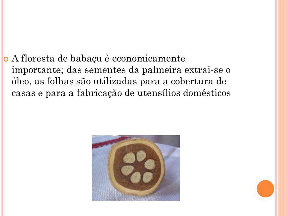 A floresta de babaçu é economicamente importante; das sementes da palmeira extrai-se o óleo, as folhas são utilizadas para a cobertura de casas e para a fabricação de utensílios domésticos