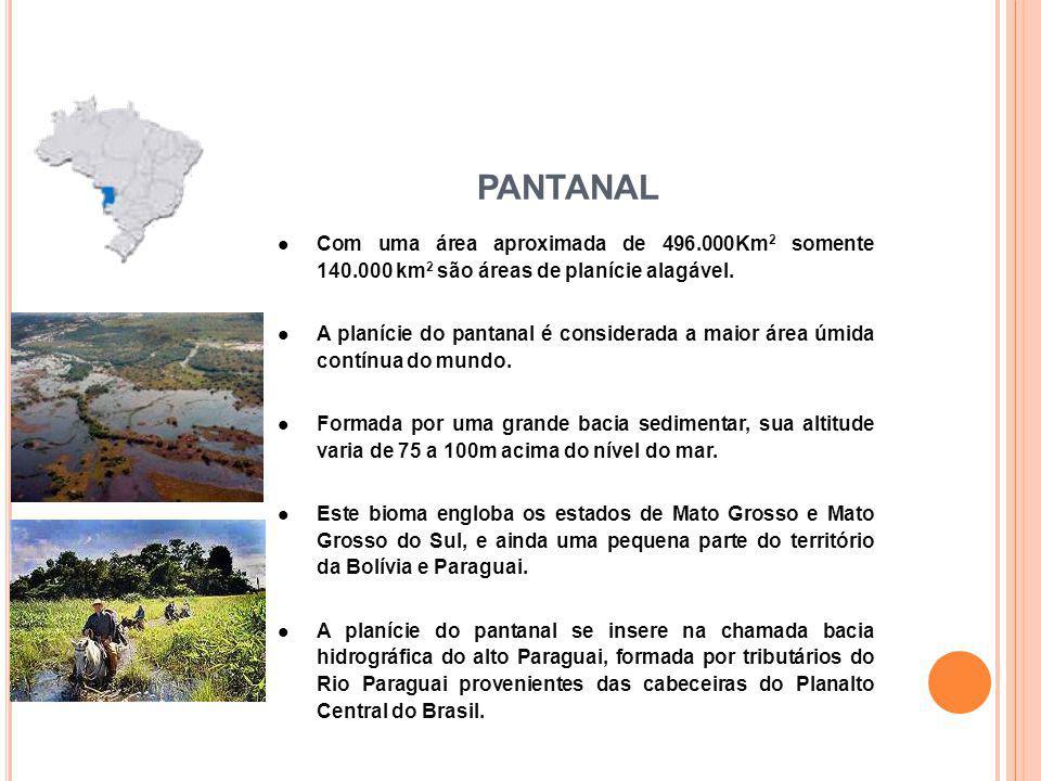 PANTANAL Com uma área aproximada de 496.000Km2 somente 140.000 km2 são áreas de planície alagável.