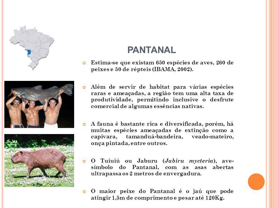 PANTANAL Estima-se que existam 650 espécies de aves, 260 de peixes e 50 de répteis (IBAMA, 2002).