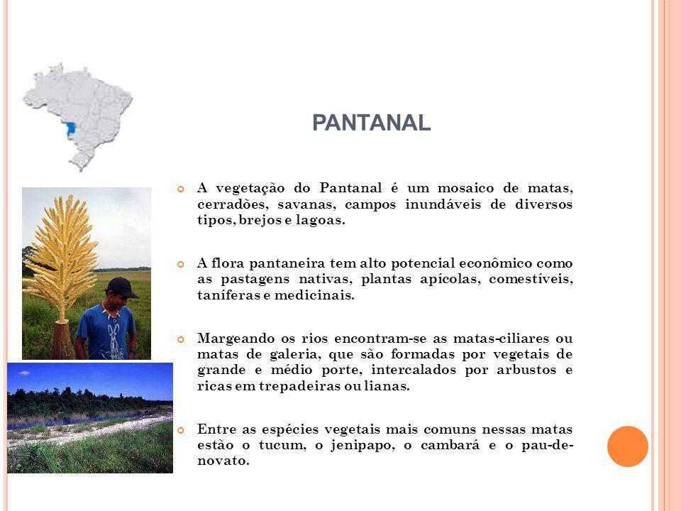 PANTANAL A vegetação do Pantanal é um mosaico de matas, cerradões, savanas, campos inundáveis de diversos tipos, brejos e lagoas.