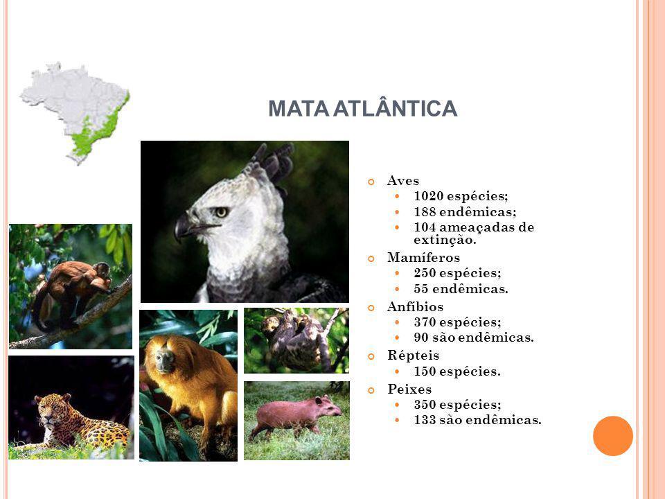 MATA ATLÂNTICA Aves 1020 espécies; 188 endêmicas;