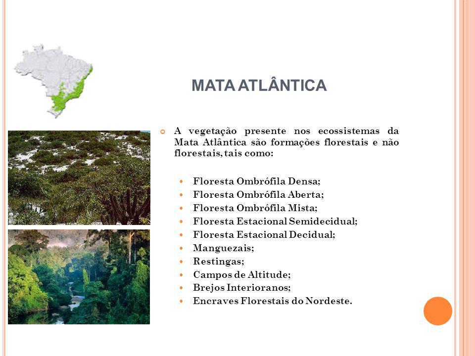 MATA ATLÂNTICA A vegetação presente nos ecossistemas da Mata Atlântica são formações florestais e não florestais, tais como: