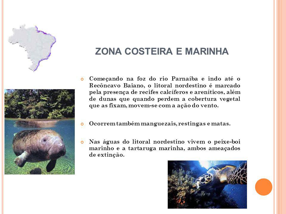 ZONA COSTEIRA E MARINHA