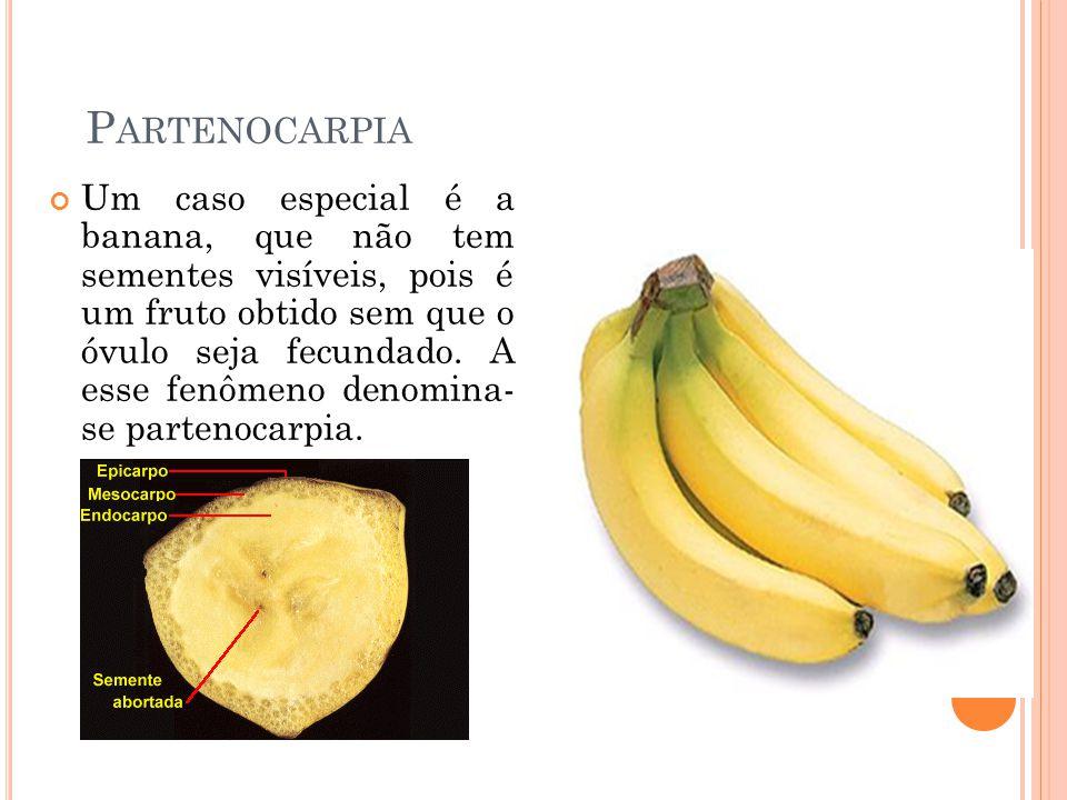 Partenocarpia