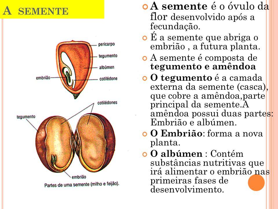 A semente A semente é o óvulo da flor desenvolvido após a fecundação.