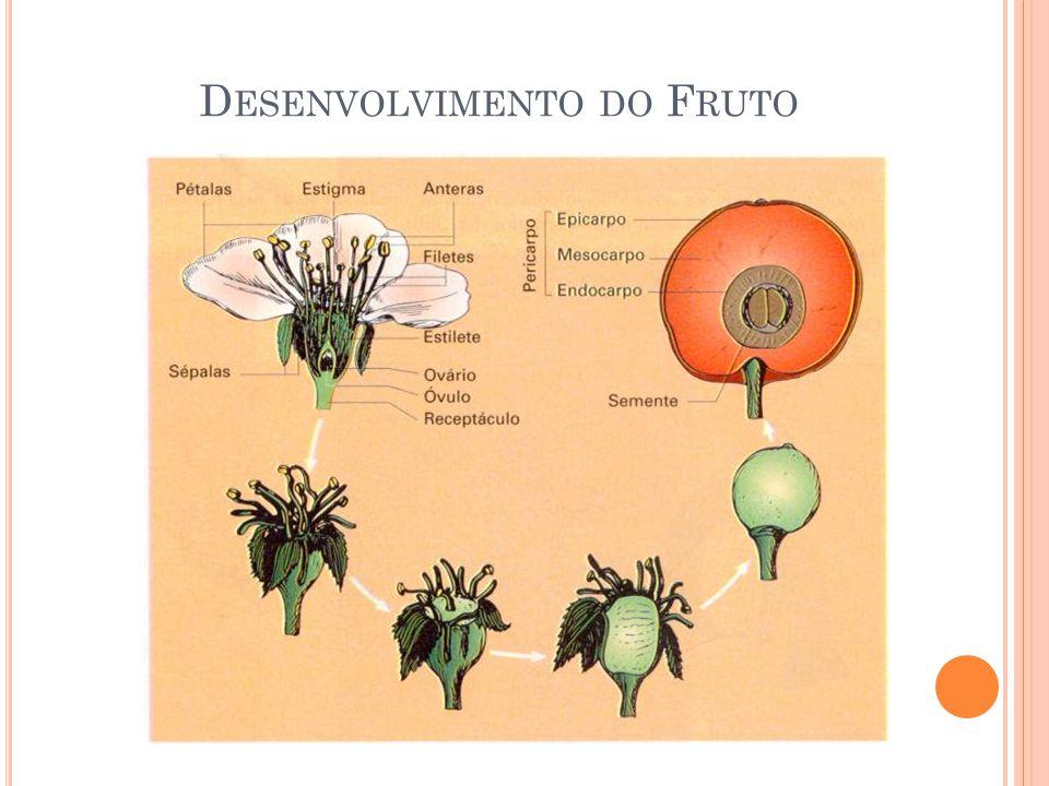 Desenvolvimento do Fruto