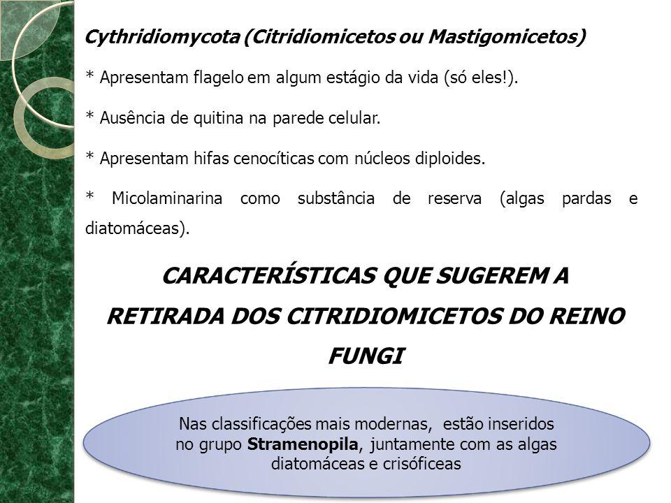 Cythridiomycota (Citridiomicetos ou Mastigomicetos)