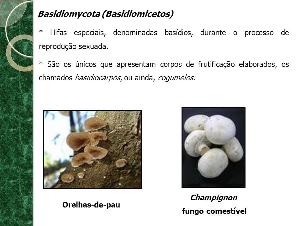 Basidiomycota (Basidiomicetos)