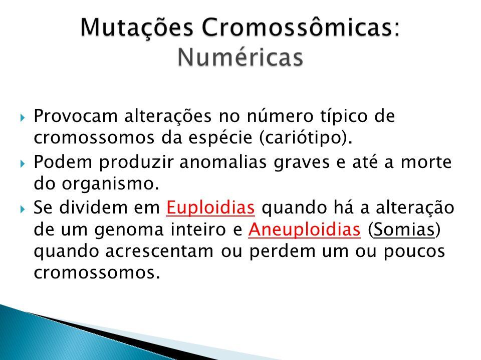 Provocam alterações no número típico de cromossomos da espécie (cariótipo).