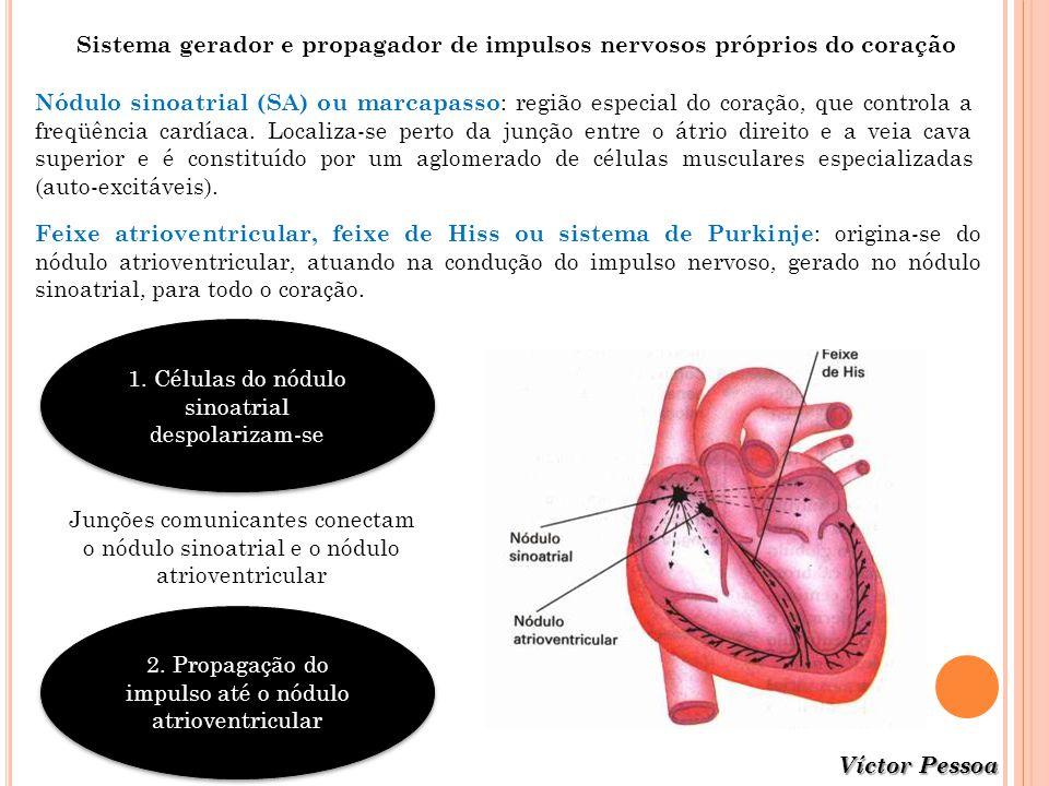 Sistema gerador e propagador de impulsos nervosos próprios do coração