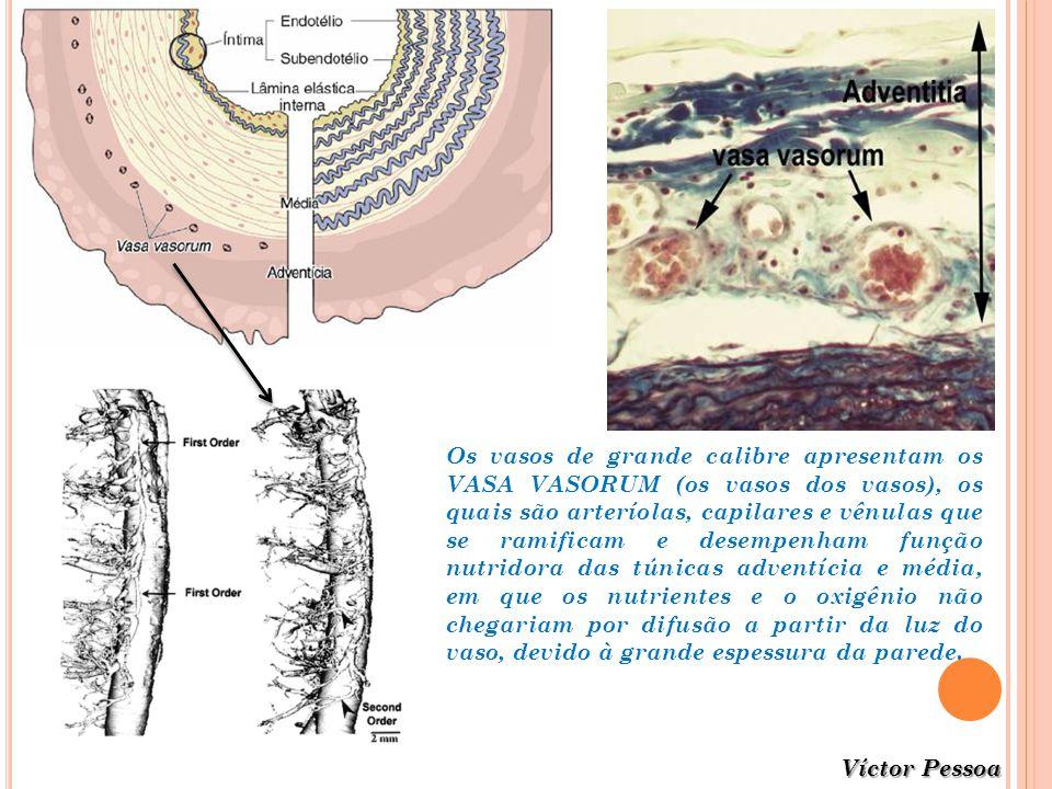 Os vasos de grande calibre apresentam os VASA VASORUM (os vasos dos vasos), os quais são arteríolas, capilares e vênulas que se ramificam e desempenham função nutridora das túnicas adventícia e média, em que os nutrientes e o oxigênio não chegariam por difusão a partir da luz do vaso, devido à grande espessura da parede.
