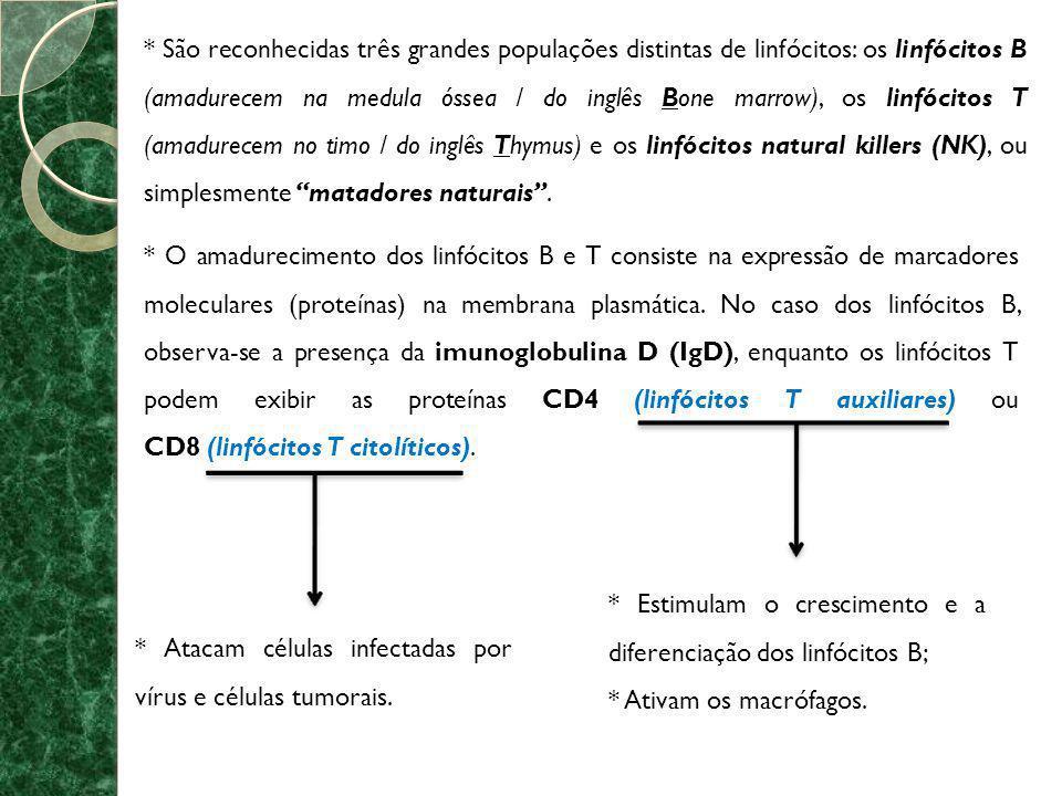 * São reconhecidas três grandes populações distintas de linfócitos: os linfócitos B (amadurecem na medula óssea / do inglês Bone marrow), os linfócitos T (amadurecem no timo / do inglês Thymus) e os linfócitos natural killers (NK), ou simplesmente matadores naturais .