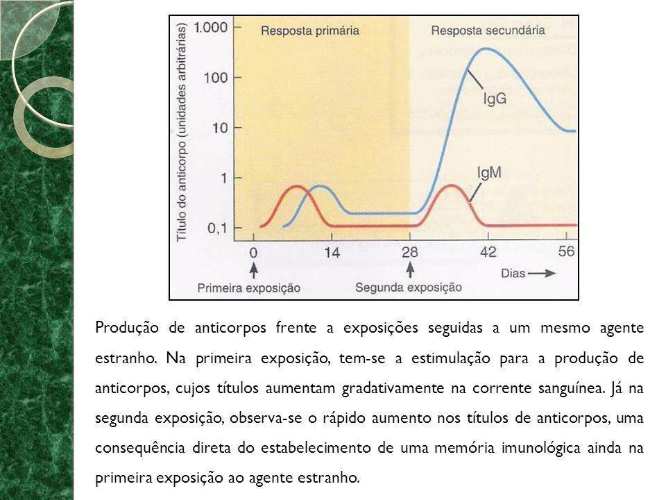 Produção de anticorpos frente a exposições seguidas a um mesmo agente estranho.