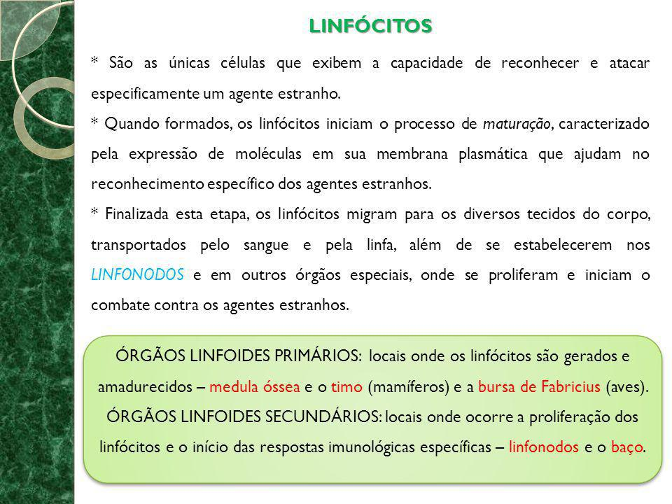 LINFÓCITOS * São as únicas células que exibem a capacidade de reconhecer e atacar especificamente um agente estranho.