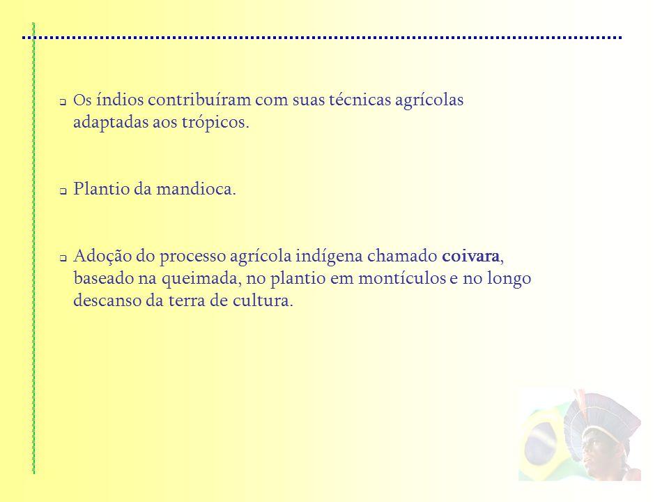 Os índios contribuíram com suas técnicas agrícolas