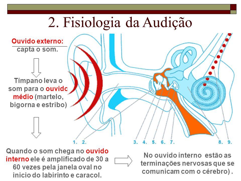 2. Fisiologia da Audição Ouvido externo: capta o som.