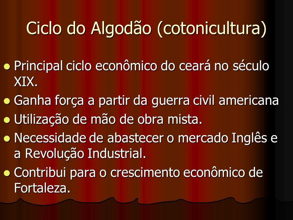 Ciclo do Algodão (cotonicultura)