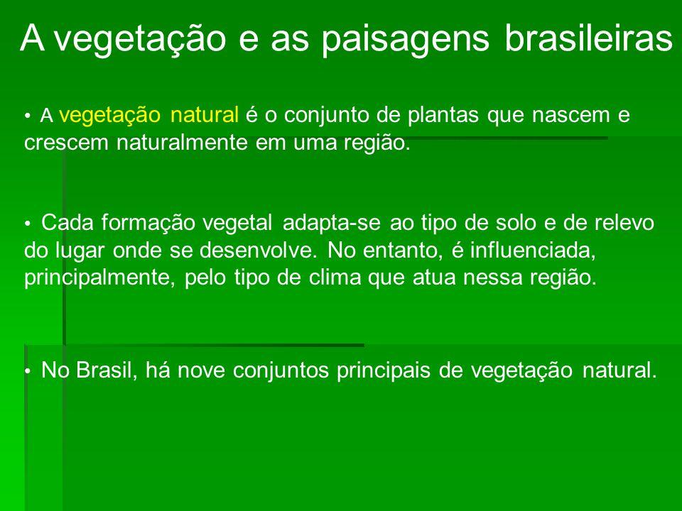 A vegetação e as paisagens brasileiras