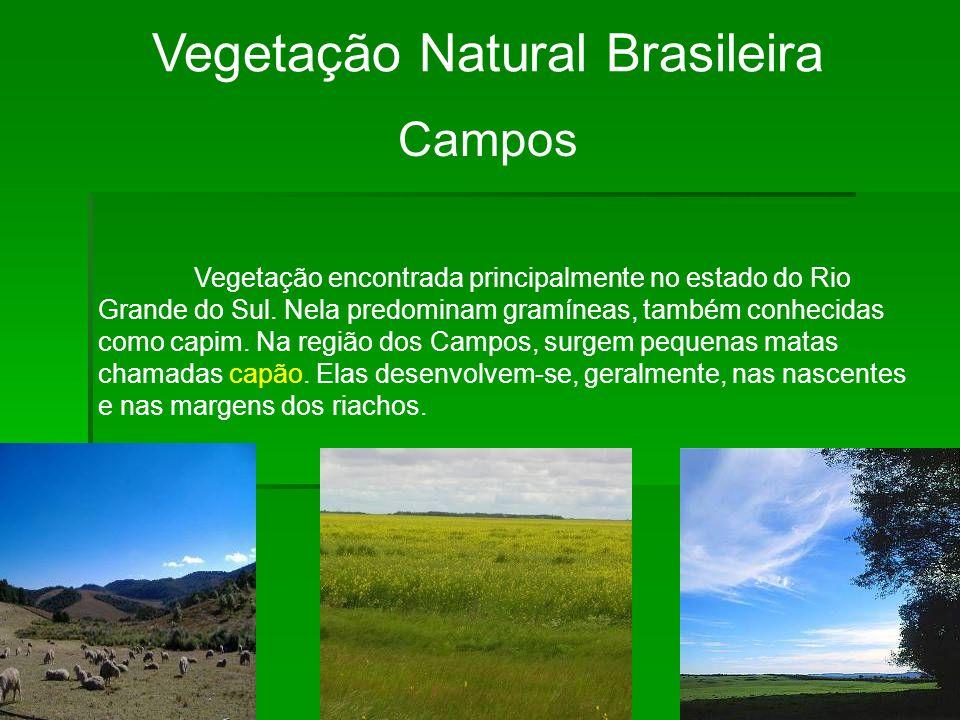 Vegetação Natural Brasileira