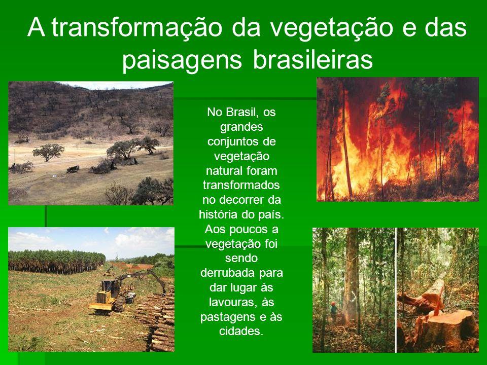 A transformação da vegetação e das paisagens brasileiras