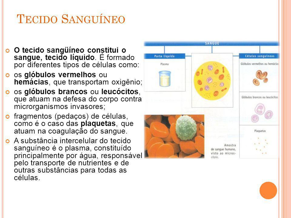 Tecido Sanguíneo O tecido sangüíneo constitui o sangue, tecido líquido. É formado por diferentes tipos de células como:
