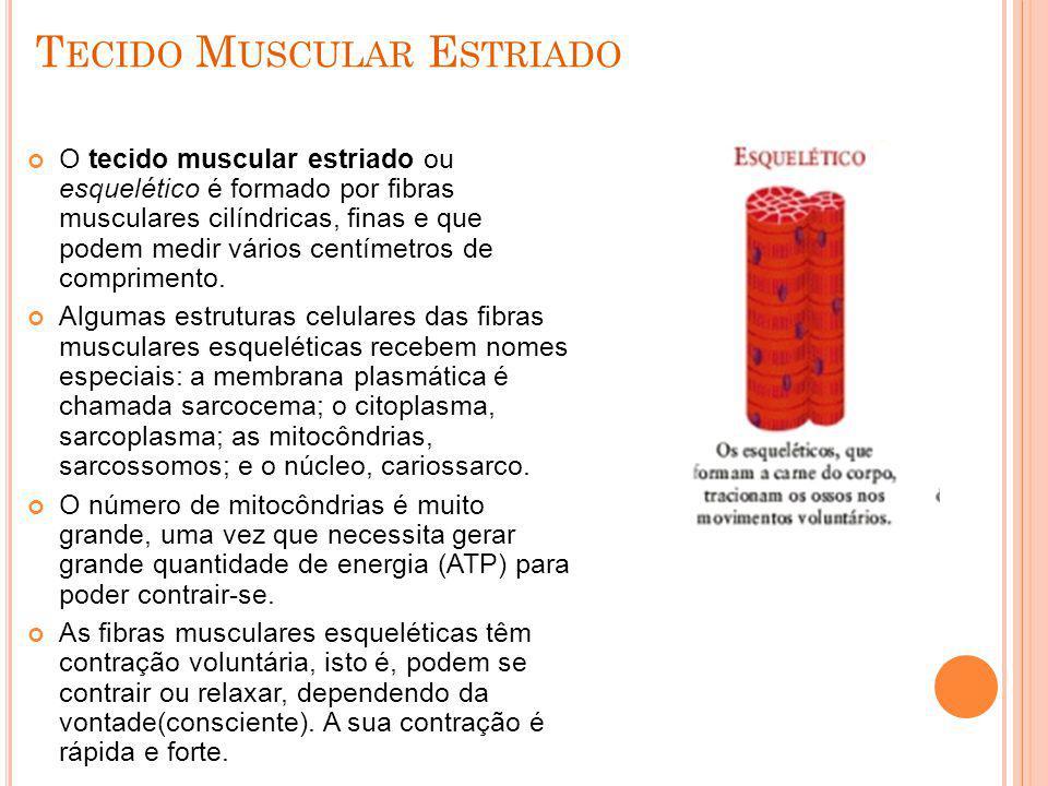 Tecido Muscular Estriado