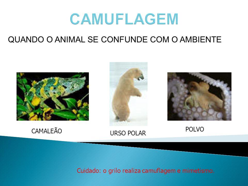 QUANDO O ANIMAL SE CONFUNDE COM O AMBIENTE