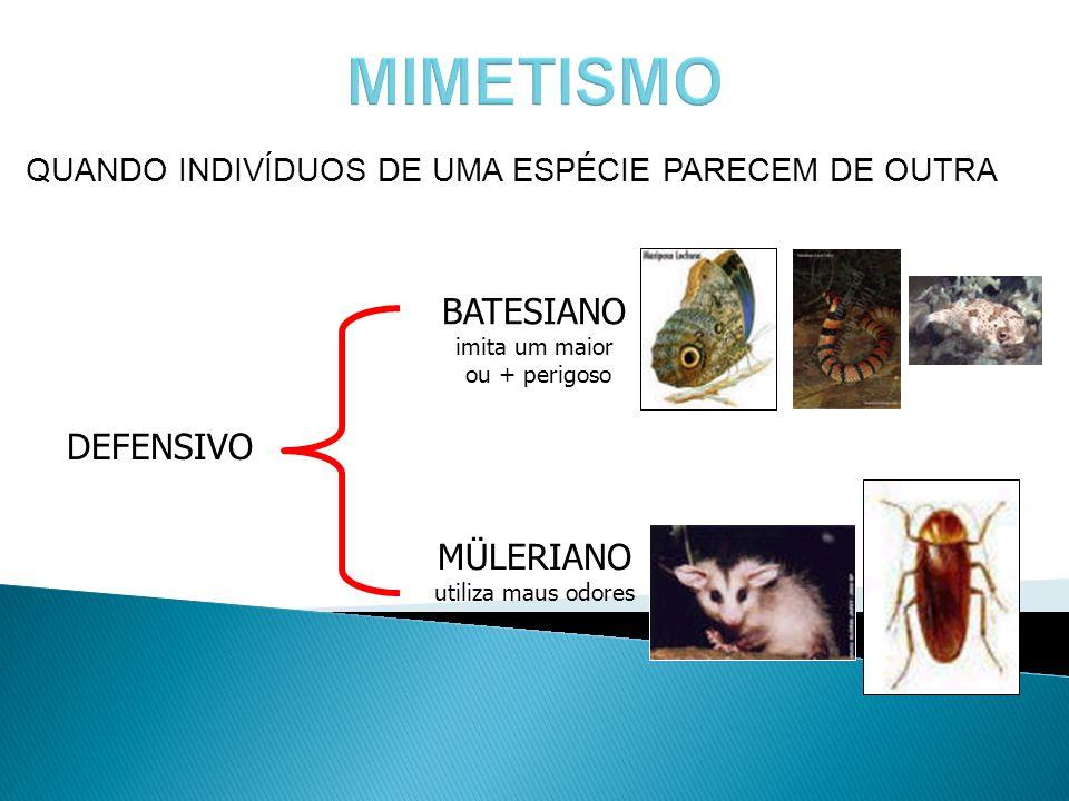 MIMETISMO BATESIANO imita um maior ou + perigoso DEFENSIVO