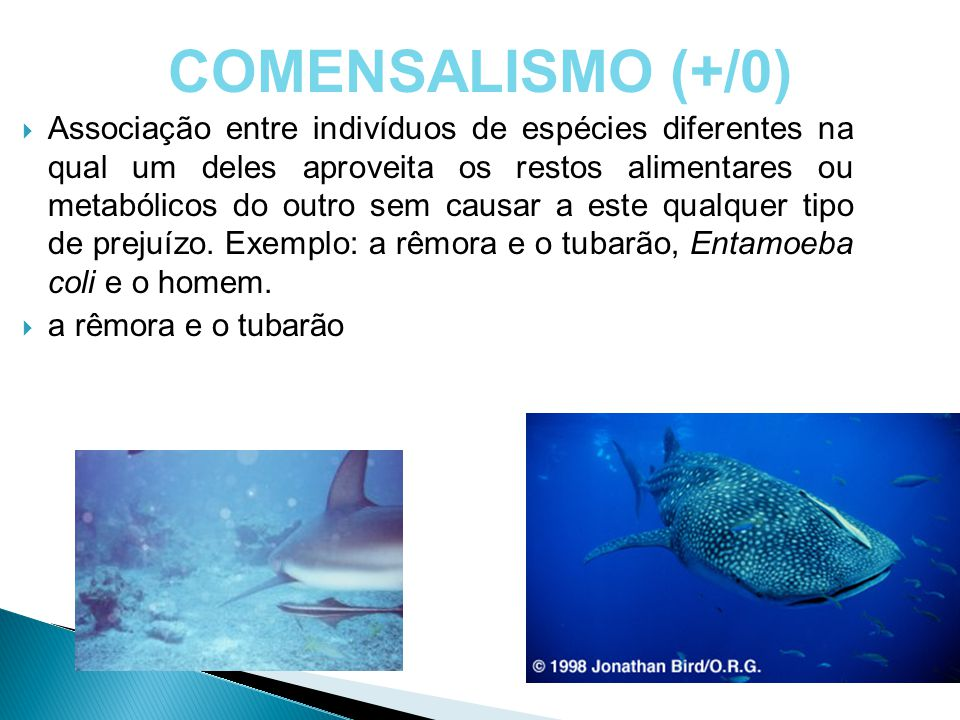 COMENSALISMO (+/0)